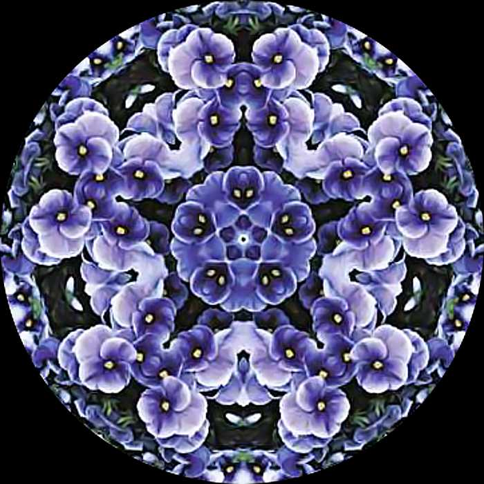 Picture Of violet flowers